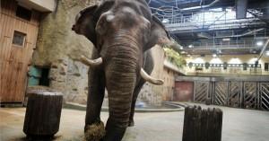 Музей слонов